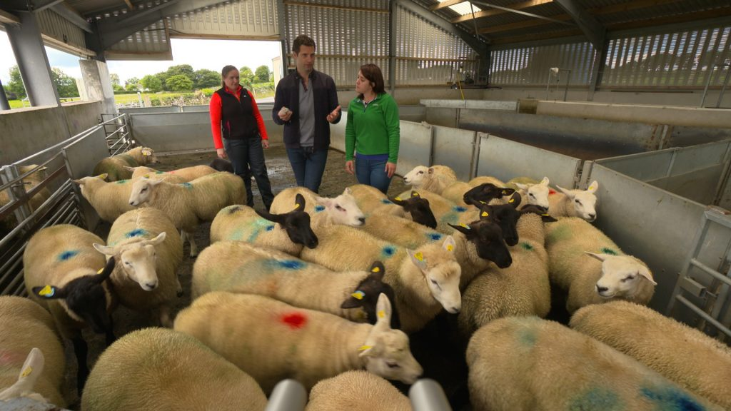 Genetics - INZAC Sheep - Jonathan, Noirin and Fiona